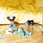Programy indywidualne na jodze