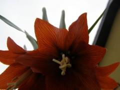 Wnętrze kwiata